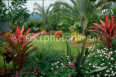 Tropical Flower Carden - Yahoo Image Search Results