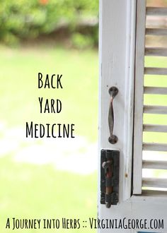 We can find so many useful herbs right in our own back yard! Which ones do you have in your area? | Back Yard Medicine :: A Journey Into Herbs | Virginia George