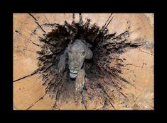 Insolite Découvrez Stuckie, le chien momifié depuis près de 60 ans dans un tronc d'arbre! (vidéo)