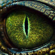 eye of the crocodile - very cool!  #animals #wildlife #reptile:
