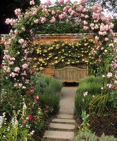 Mottisfont Abbey Rose Gardens, Hampshire, UK | The best romantic rose garden in the world (1 of 20) | Garden seat framed by rose pergola.