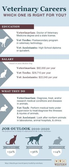 Actually, it's easier to list what a vet tech CAN'T do, rather than a long list of what they CAN do...
