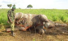 New Tech Tool Could Help Nab Poachers Before They Strike | Care2 Causes