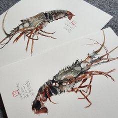 "Ch'ng Kiah Kiean on Instagram: ""Lobster study.  #kiahkiean"" Urban Sketchers, Watercolor Sketch, Sketches, Study, Ink, Flora, Animals, Instagram, Dibujo"