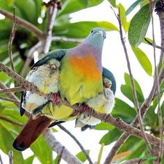 Mom protecting