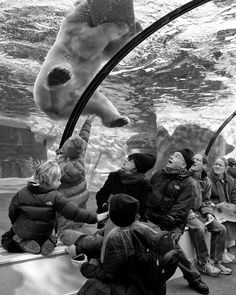 """""""Visitors marvel as a polar bear frolics underwater at the Detroit Zoo.""""    Smithsonian.com Photo of the Day: August 28, 2012.  Photo by Brian Day."""