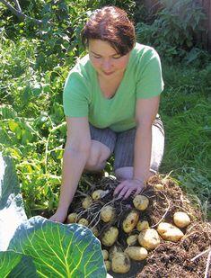 И почва «добреет», и урожай — на славу!