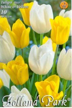 Tulipán Duo- Fehér és sárga tulipán Holland Park, Rose, Flowers, Plants, Pink, Plant, Roses, Royal Icing Flowers, Flower