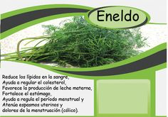 Agua de flores medicinal#Eneldo#Dill#  شوید Barcelona, Herbs, Mother's Milk, Cholesterol, Water, Flowers, Barcelona Spain, Herb, Medicinal Plants