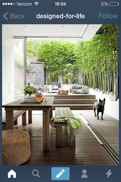 Finally! A decent picture of how i envision a bamboo hedge along my back wall looking like. Privacy and shade!