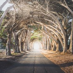 Follow the light by kylehouck