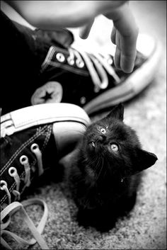 Black kitten &  converse b&w