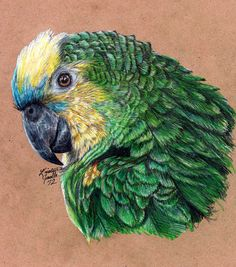 A portrait of Huntington, my blue-fronted amazon parrot. Used a couple references for pose, as well as my live model of course. I love him! He's two years old now, celebrated his second hatchday in...