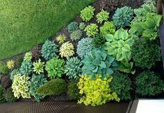 Így legyen a kerted árnyékos része is buja és virágzó Herbs, Plants, Flowers, Herb, Plant, Planets, Medicinal Plants