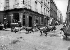 Vendeur de lait de chèvre. Paris, 1900-1910.