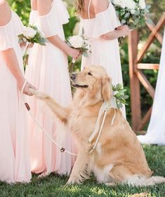 How darling is this flower girl 🌸 🐶 accompanying wearing our Blush Adele Maxi Dresses! Dog Wedding, Wedding Pics, Wedding Bells, Summer Wedding, Wedding Styles, Wedding Gowns, Dream Wedding, Wedding Day, Blush Dresses