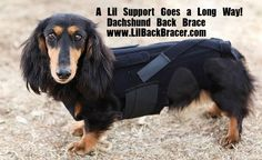 The Lil' Back Bracer really helped out dog, Malcolm, when he lost motor function due to disc disease.  Now, he is up and running again.  Plus, it looks like a cool SWAT vest, so he is stylish and protected.