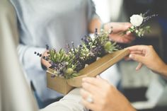 Wedding flowers by Jennifer Pinder. White and purple buttonholes with sea holly thistles, gypsophila, lavender and limonium. Perfect for a country style wedding and great buttonhole packaging! xx