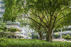Galeria de Campus de Pesquisa - CREATE / Perkins+Will - 6