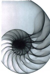 X-ray of nautilus shell