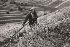 Martin Martinček - Žnec-1960–1965 Heart Of Europe, Old Photography, Eastern Europe, Historical Photos, Alter, Black And White Photography, Old Photos, Darth Vader, Grass