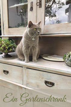 Alles griffbereit wenn Gäste kommen Cluster, Cats, Unique, Animals, Design, White Flowers, Summer Flowers, Garden & Outdoor, Flowers Garden