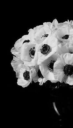 Crafts For Toddlers Children Tropical Flowers Arrangements Centre Pieces Beautiful Flower Arrangements, Floral Arrangements, Beautiful Flowers, Beautiful Bouquets, White Anemone, Anemone Flower, Tropical Flowers, Fresh Flowers, White Flowers