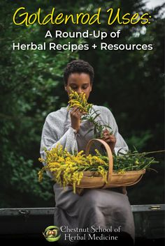 Goldenrod Round-Up: Herbal Recipes & Resources  #goldenrod #solidago #herbalist #herbalife #apothecary #herbalmedicine