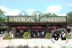 Best Disney's Animal Kingdom Restaurants for Teens at Walt Disney World - See: http://www.squidoo.com/Animal-Kingdom-restaurants-for-teens