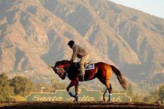 Santa Anita Park; Arcadia, CA (Wally Skalij / Los Angeles Times)