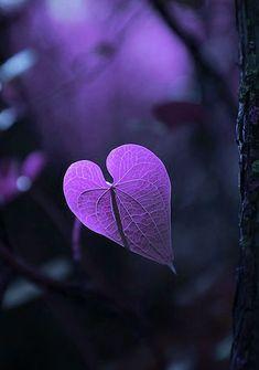 Purple | Porpora | Pourpre | Morado | Lilla | 紫 | Roxo | Colour | Texture | Pattern | Style | Form | Heart