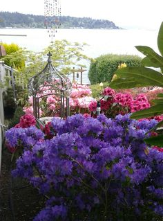 My rhododendron garden by the bay. Photo by Jan R. Fuller