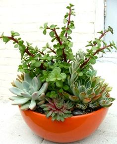 Be creative, use bold planters and stuff them with your favorite succulents, they make great living arrangements! A great alternative to flowers!