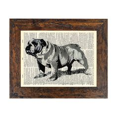 Portrait of an English Bulldog Art Print on an Unframed Upcycled Bookpage