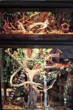 Äntligen så är terrariebygget färdigt! - Burar/Bostad/Byggen - Exotiska Djur iFokus #rabbithouses Hamster Diy Cage, Hamster Care, Hamster House, Rat House, Pet Mice, Pet Rats, Chinchillas, Pet Rat Cages, Hedgehog Cage
