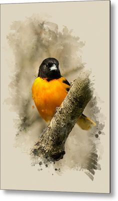 Baltimore Oriole Watercolor Art Metal Print by Christina Rollo.  All metal prints are professionally printed, packaged, and shipped within 3 - 4 business days and delivered ready-to-hang on your wall. Choose from multiple sizes and mounting options.