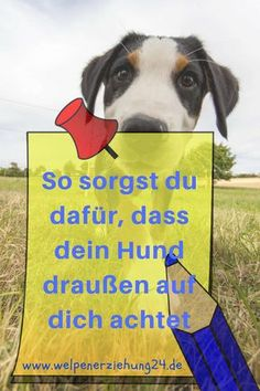 """3 klasse Tipps, damit dein Hund draußen auf dich achtet """"My puppy is chasing me at every turn, but outside I am air for him! Pet Dogs, Dogs And Puppies, Dog Cat, Animals And Pets, Cute Animals, Dog Hacks, New Puppy, Take Care Of Yourself, Dog Love"""