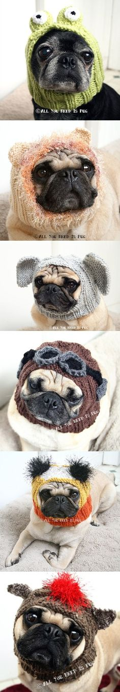 Does your pug need a groovy hat?