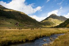 Cows in Andorra by Marjolaine Petit on 500px