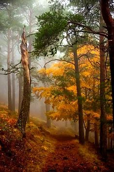 """~ Autumn ~ """"Use the first day of fall: bright flame before winter's deadness; cool nights and the smell of fire. Landscape Photos, Landscape Paintings, Landscape Photography, Nature Photography, Forest Path, Tree Forest, Autumn Forest, Beautiful World, Beautiful Places"""