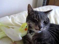 Bird preening cats whiskers