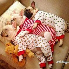 .OMG 3 fur babies in Xmas jammies!