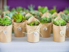 Not only cut plants can give joy but also potted ones! Use potted flowers, succulents, various greenery for making centerpieces, arches, lining the aisle . Succulent Wedding Favors, Gifts For Wedding Party, Wedding Favours, Our Wedding, Wedding Flowers, Succulant Wedding, Succulent Gifts, Wedding Souvenir, Wedding Ideas