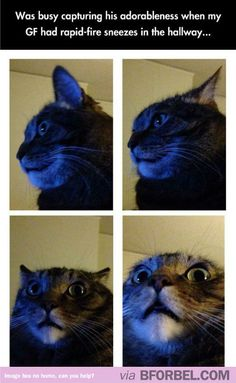 """""""My Cat's Reaction To My Girlfriend Sneezing"""" It's terrifying!"""