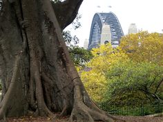 Sydney man-made and natural architecture.            arquitecto - michelle moore