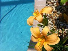 Pretty pool flowers!