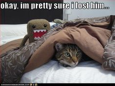 Kitteh is too clever for Domo!