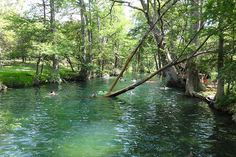 Wimberley Blue Hole Regional Park in Wimberley, TX - https://www.realtyaustin.com/austin-swimming-holes.php#3