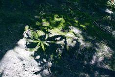 New free stock photo of wood landscape rocks