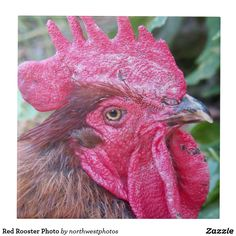 Red Rooster Photo Ceramic Tile